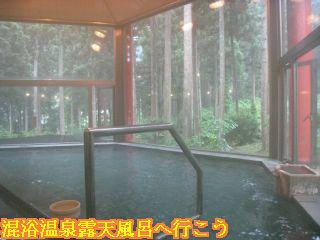 内湯から見える森林の景色